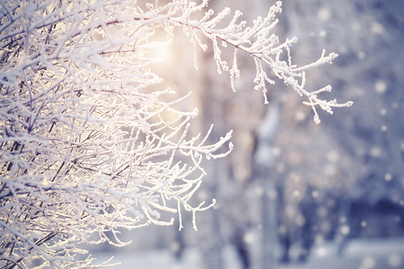 Photo pour Branches in hoarfrost and snow in the winter, are lit with the sun. - image libre de droit
