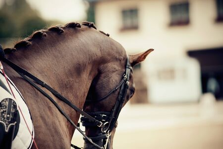 Photo pour Neck brown sports stallion in the double bridle. Dressage of horses in the arena. Equestrian sport. - image libre de droit