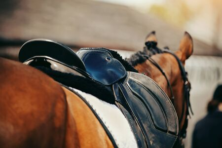 Photo pour Saddle with stirrups on a back of a horse. Equestrian sport. - image libre de droit