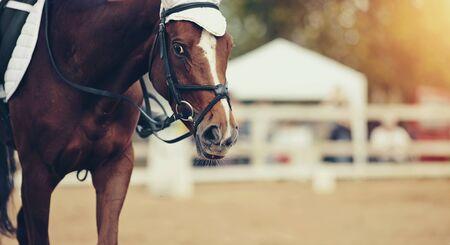 Photo pour Portrait sports red stallion in the bridle. Dressage of horses. Equestrian sport. - image libre de droit