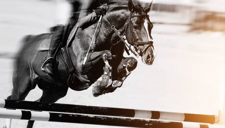 Photo pour The horse overcomes an obstacle. Equestrian sport, jumping. - image libre de droit