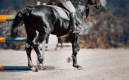 Photo pour Feet running sports black horse. Legs of a sporting horse in knee-caps. Dust under the horse's hooves. Legs of a galloping horse. Horseback riding. Jumping competition. Equestrian sport, jumping. Overcome obstacles. - image libre de droit