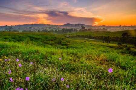 Photo pour Wonderful Dairy Farm sunrise landscape with blooming Mexican petunia (Ruellia brittoniana)  flowers, sunrise scenery, colorful  scene, and beauty farm. - image libre de droit