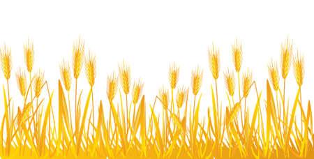 Illustration pour Wheat  - image libre de droit