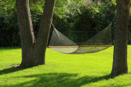 Hammock between two trees with green grass. Summertime at it's best.