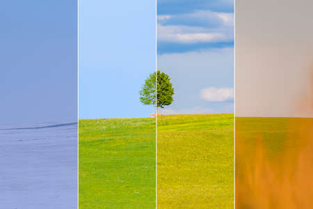 Photo pour Climate change winter spring summer fall over the year blocks. Nature weather visual with a single tree on a hill. Cold snow and a juicy green meadows have a transition to a hot autumn field. - image libre de droit