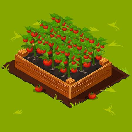 Ilustración de Vegetable Garden Wooden Box with Tomatoes. - Imagen libre de derechos