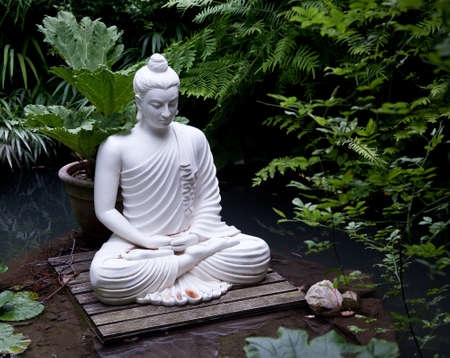 Statue of Buddha on wooden platform in pool surrounded by ferns