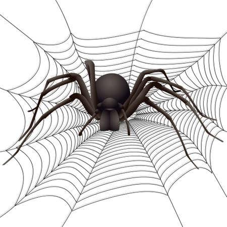 big spider in the web. Vector illustration