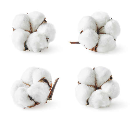 Foto de Set of various cotton flowers isolated on white - Imagen libre de derechos