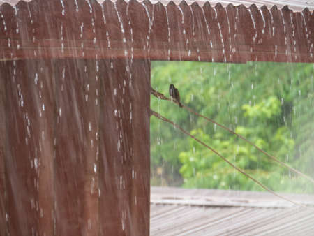 Blur rain and roof iron background, Rain on the roof, blured small bird in roof,