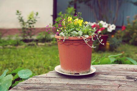 Photo pour garden flowers in a ceramic pot on a wooden background - image libre de droit