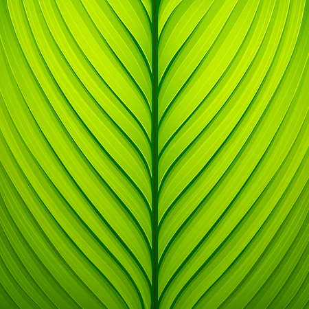 Texture of a green leaf.