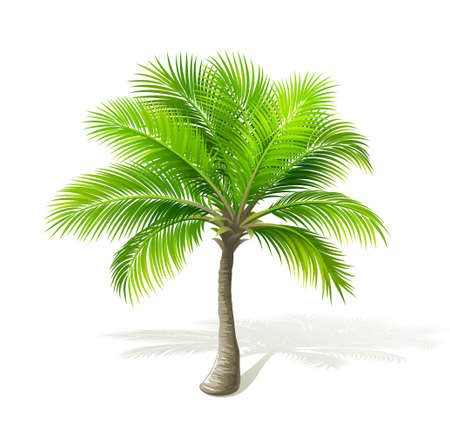 Illustration for Palm tree - Royalty Free Image