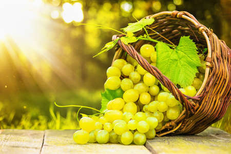 Foto für Ripe grapes in wicker basket on sunny background - Lizenzfreies Bild