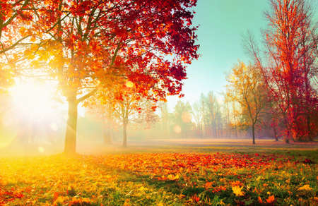 Photo pour Autumn Landscape. Fall Scene. Trees and Leaves, Foggy Forest in Sunlight Rays - image libre de droit