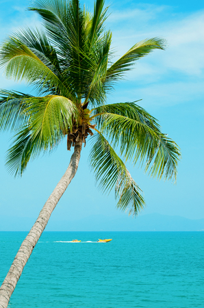 Photo pour Holidays at sea. The turquoise water and palm tree on blue sky background. Boat and fun - image libre de droit
