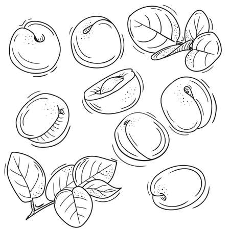 Illustration pour vector illustration of apricot in Doodle style. outline drawing of an apricot. the minimalistic design of fruit. - image libre de droit