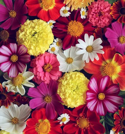 Photo for floral background, top view. garden flowers. flat lay. bright natural backdrop. - Royalty Free Image