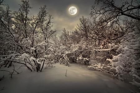 Moonlight night in winter wood