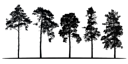 Illustration pour Set of realistic vector silhouettes of coniferous trees - isolated on white background - image libre de droit