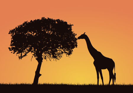Illustration pour Silhouette of giraffe, grass and tree in the African safari landscape. Orange sky with space for text - vector - image libre de droit