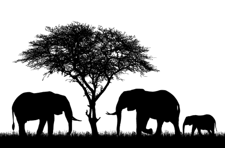 Illustration pour Realistic illustration with silhouette of three elephants on safari in Africa. Acacia tree and grass isolated on white background - vector - image libre de droit