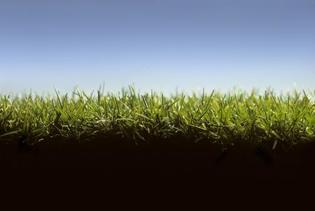 Photo pour Cross section of lawn showing blades of grass at ground level - image libre de droit