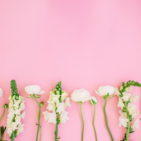 Photo pour Frame of white flowers - ranunculus and snapdragonon pink background. Flat lay, top view. Floral background. - image libre de droit