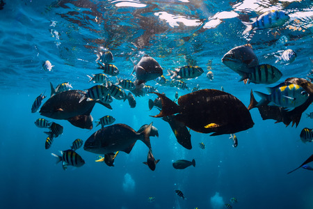 Photo pour Underwater world with tropical fish in the Indian ocean - image libre de droit