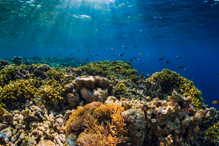 Photo for Wild underwater world with corals and tropical fish. - Royalty Free Image