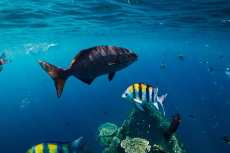 Photo pour Amazing underwater world with tropical fish and corals at shipwreck - image libre de droit