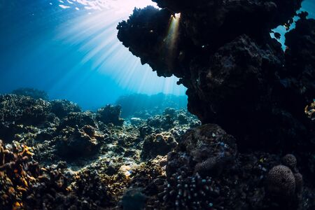 Photo pour Tranquil underwater scene with copy space. Tropical transparent ocean with corals and rocks - image libre de droit