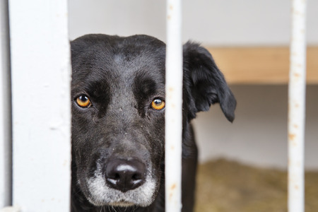dog at the shelter.