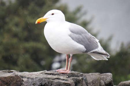 Seagull sitting on ledge