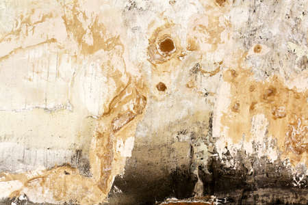 Bad condition of wall with distincive fungus and mold