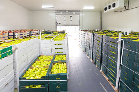 Photo for Peppers and Apples in Crates Storage Warehouse - Royalty Free Image