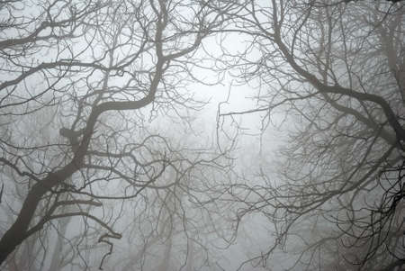 Bare Tree Branches in the Fog