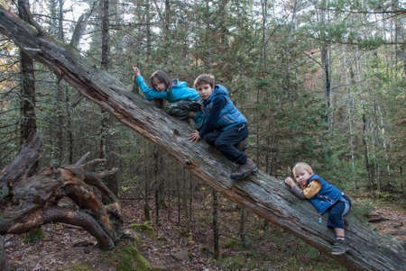Three baby in autumn park climb the trunk of dry tree, Marinette county, Wisconsin