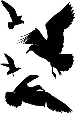 Some silhouettes of seagulls flying
