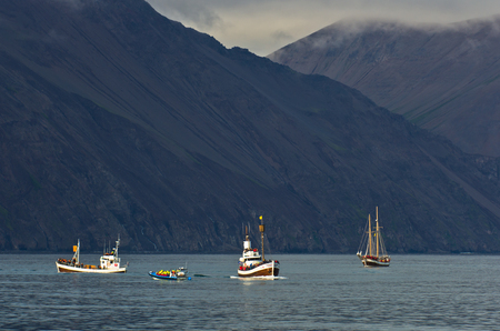 Whale watching tours at Husavik bay area, north Iceland