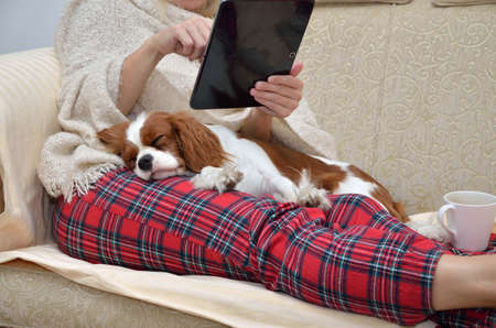 Photo pour Woman in cozy home wear relaxing on sofa with a sleeping cavalier dog on her lap, holding tablet and reading - image libre de droit