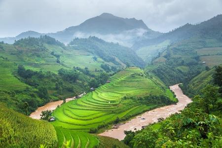 Green Rice fields on terraced in Mu cang chai, Vietnam
