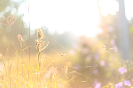 Beautiful morning landscape - grass and sunlight as nature background