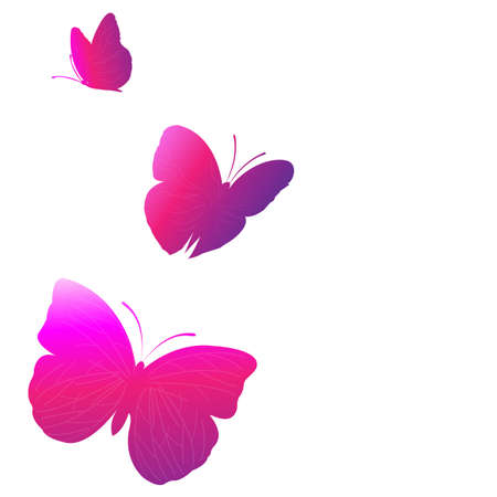 3 Bright  Butterflies, Isolated On White Background