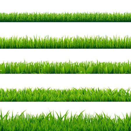 Grass Big Set, Vector Illustration