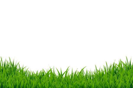 Green Grass Border, Vector Illustration