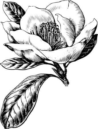 Flower on white