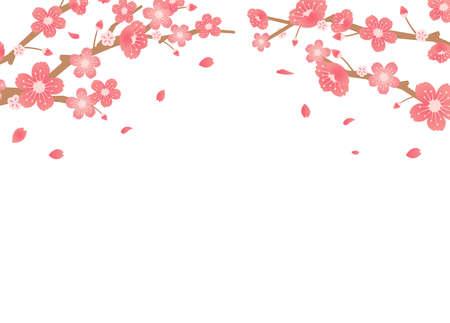 Illustration pour Cherry blossoms background illustration ( spring season theme )  - image libre de droit
