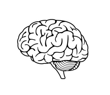 Illustration pour Vector illustration of human brain - image libre de droit